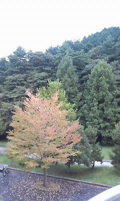 秋ですなぁ〜